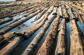 Pile of wood  immersed in water — Stock Photo