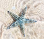 Starfish on beach in Thailand — Fotografia Stock