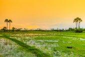 Paddy views  in Chiang Mai — Stock Photo