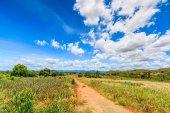 Landscape  road in rural areas — Stockfoto