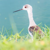 Seabird  animal in Thailand — Stok fotoğraf