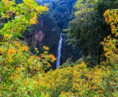 Sunflowers and Mae Surin waterfall — Stock Photo