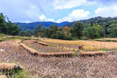 Thailand Farmers in Maehongson Province — Stock Photo