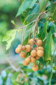 Fruits longan in Chiang Mai — Stock Photo
