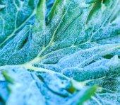 Folha vegetal em geada — Fotografia Stock