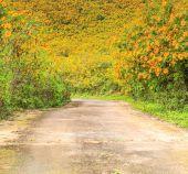 Strada e bellissimi fiori — Foto Stock