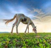 Paard op de weide grazen — Stockfoto