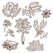 Set of Herbs and Spices. Natural spices. Compilation of vector sketches. Kitchen herbs and spice. Vintage style. Hand drawn. — Stock vektor