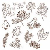 Set of Herbs and Spices. Natural spices. Compilation of vector sketches. Kitchen herbs and spice. Vintage style. Hand drawn. — Stockvektor