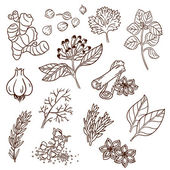 Set of Herbs and Spices. Natural spices. Compilation of vector sketches. Kitchen herbs and spice. Vintage style. Hand drawn. — Stok Vektör