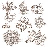 Set of Herbs and Spices. Natural spices. Compilation of vector sketches. Kitchen herbs and spice. Vintage style. Hand drawn. — Stock Vector