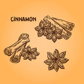 Natural spices. Compilation of vector sketches. Kitchen herbs and spice. Vintage style. Hand drawn. — Stock Vector