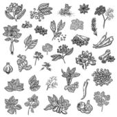 Large collection of different spices and herbs. Natural spices. Compilation of vector sketches. Kitchen herbs and spice. Vintage style. Hand drawn. — Stock Vector