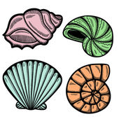 Graphic sea shells. Isolated objects on white background. Retro style. — Stock Vector