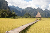 Beautiful rice fields and mountains in Vang Vieng, Laos — Stock Photo