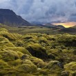 Постер, плакат: Surreal landscape with wooly moss at sunset in Iceland