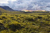 Surreal landscape with wooly moss at sunset in Iceland — Stock Photo