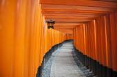 Tori thousand tree in japan — Foto Stock