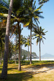 Tropical background with coconut palms. — Stock Photo