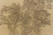 Crab patterns — Stock Photo