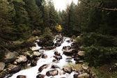 Mountain stream in the Bansko valley in Bulgaria — Stock Photo