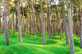 The forest wood and craters on battlefield of Vimy ridge — Stock Photo