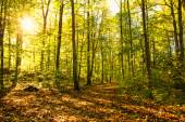 Pathway in the autumn forest with sunlight — Stock Photo