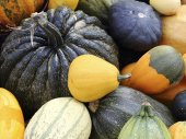 Varieties of pumpkins and squashes — ストック写真