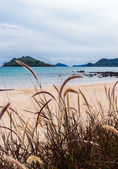 пляж трава — Стоковое фото