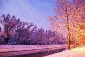Winter trees with snow — Stock Photo