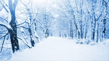 落雪 — 图库视频影像