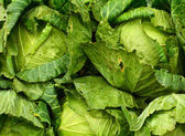 Texture of chinese cabbages — Stock Photo