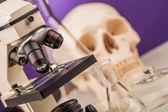 Laboratory microscope and human scull — Stock Photo