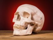 Human scull view — Stock Photo
