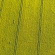 Aerial view of yellow harvest fields — Stock Photo #76178119