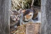 Little kittens in the barn — Stock Photo