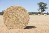 Rolled hay bales on farm land after harvest — Stock Photo