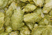 Dried Hops ( Humulus lupulus) — Stock Photo
