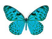 Blå fjäril — Stockfoto