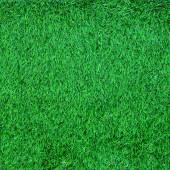 Green grass texture — Fotografia Stock
