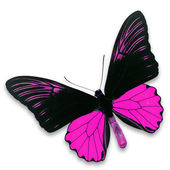 Black and pink butterfly — Fotografia Stock