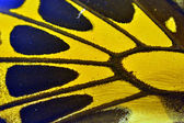 黄色の蝶の翅 — ストック写真