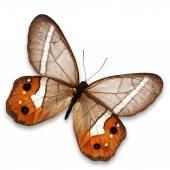 Orange butterfly — Stock Photo