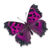 ピンクの蝶 — ストック写真