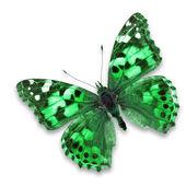 Green butterfly — Fotografia Stock