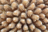Coral Texture — Stock Photo