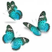 Motyl niebieski — Zdjęcie stockowe