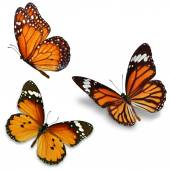 Three monarch butterfly — Stock Photo