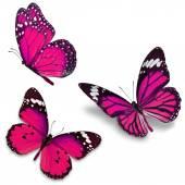 Three pink butterfly — ストック写真