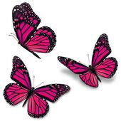 Pink monarch butterfly — Stock Photo